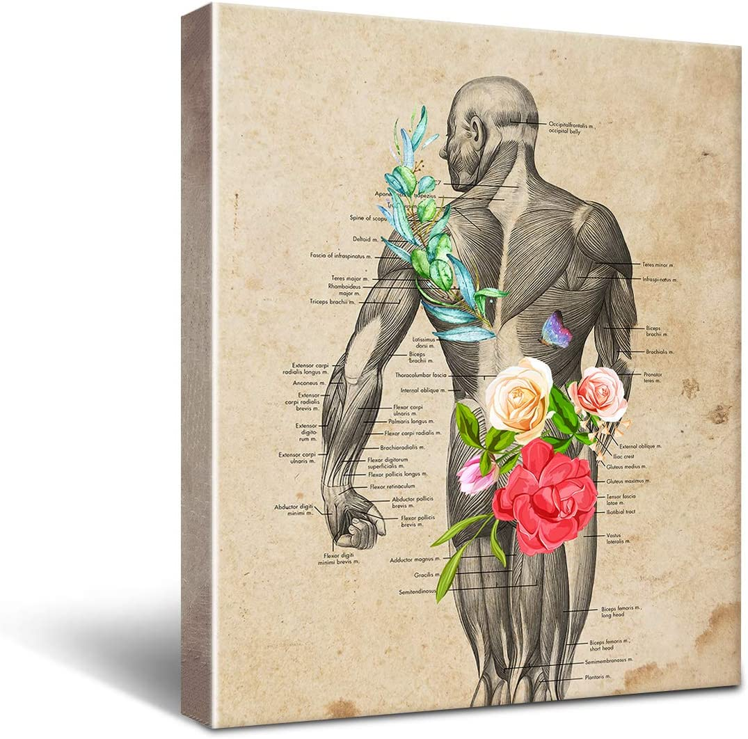 Anatomy Muscle Canvas Wall Art for medical Office Decor, Medical School Graduation Gift, social workers decor, Occupational Therapist Gift Size 8x10