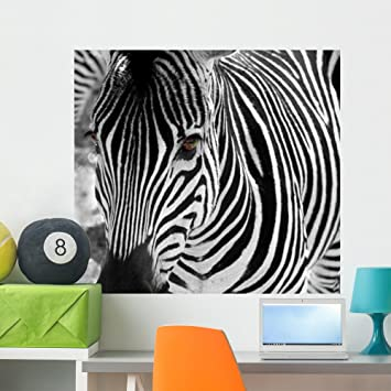 Amazoncom Zebra Wall Mural by Wallmonkeys Peel and Stick Graphic