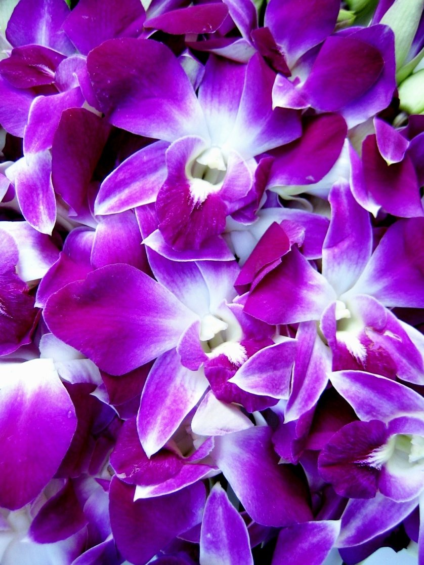 Fresh Flowers - 20 Premium Purple Dendrobium Orchids with Vase by Just Orchids (Image #2)
