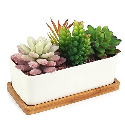 Amazon succulent planter digsky modern white ceramic cactus succulent planter digsky modern white ceramic cactus flower pot plant pot with bamboo tray mightylinksfo