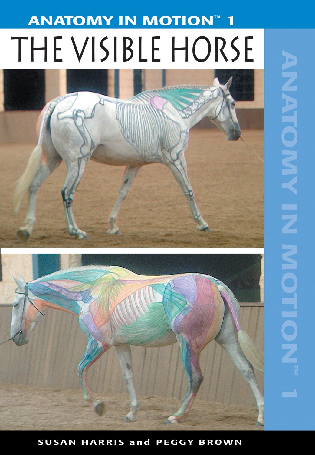 Amazon.com: Anatomy in Motion 1: The Visible Horse: Susan Harris ...