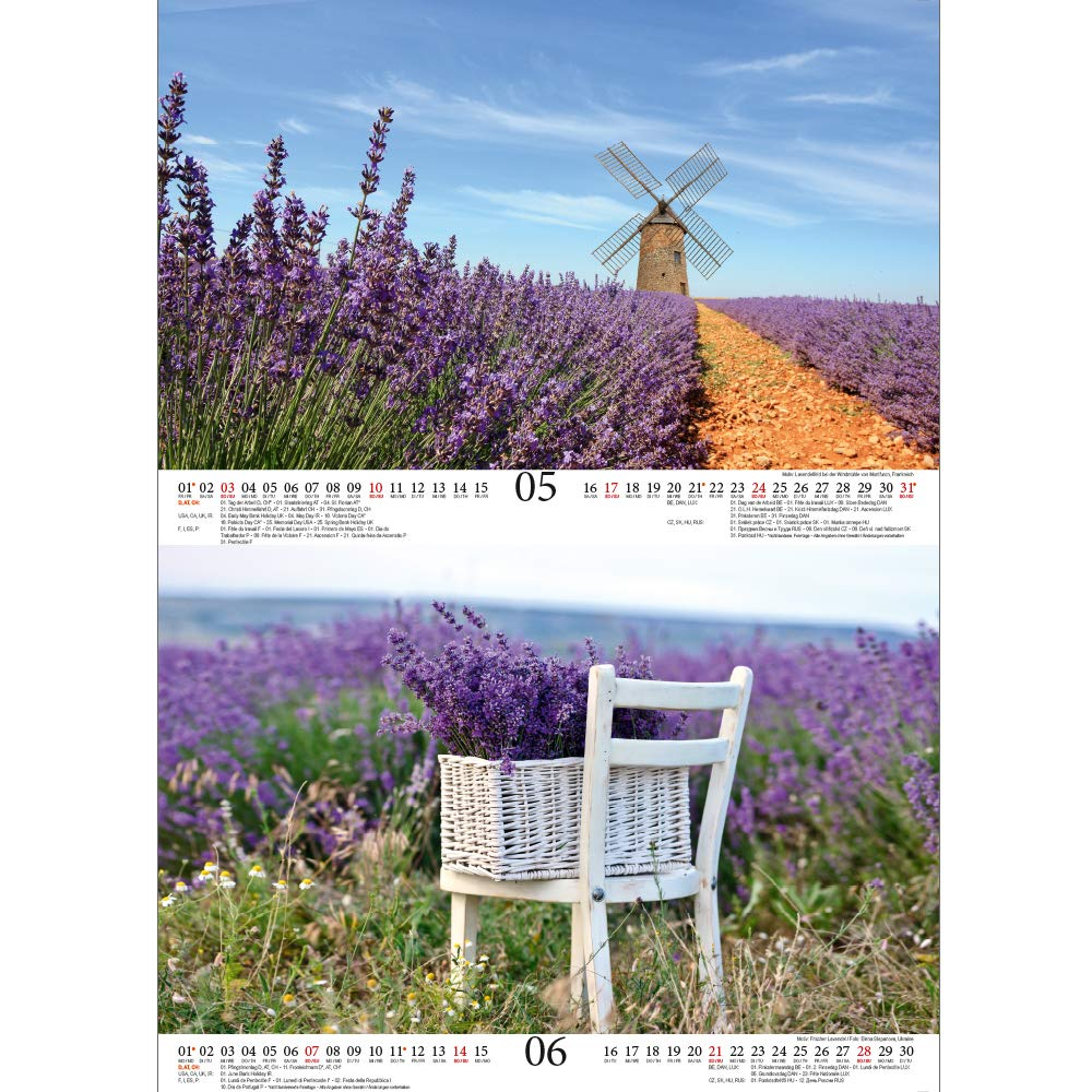 set de regalo: 1 tarjeta de felicitaci/ón y 1 tarjeta de Navidad dise/ño de lavanda Calendario 2020 DIN A4