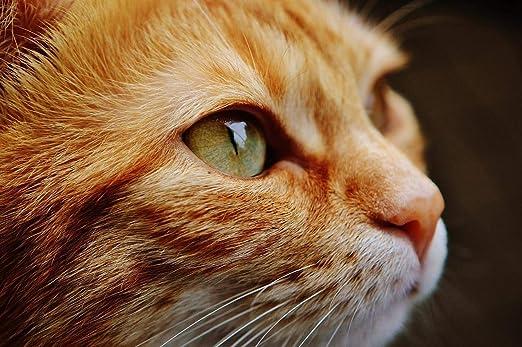 Puzzle Adulto 1000 Piezas Ojos De Gato Amarillos.Adecuado Para ...