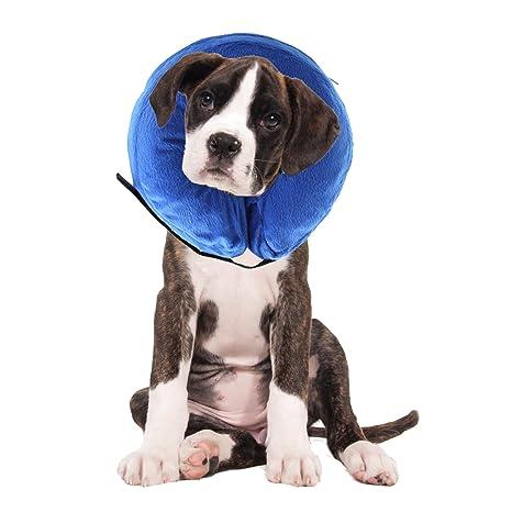 AnnaEye ProCollar - Collarín hinchable para perros y gatos ...