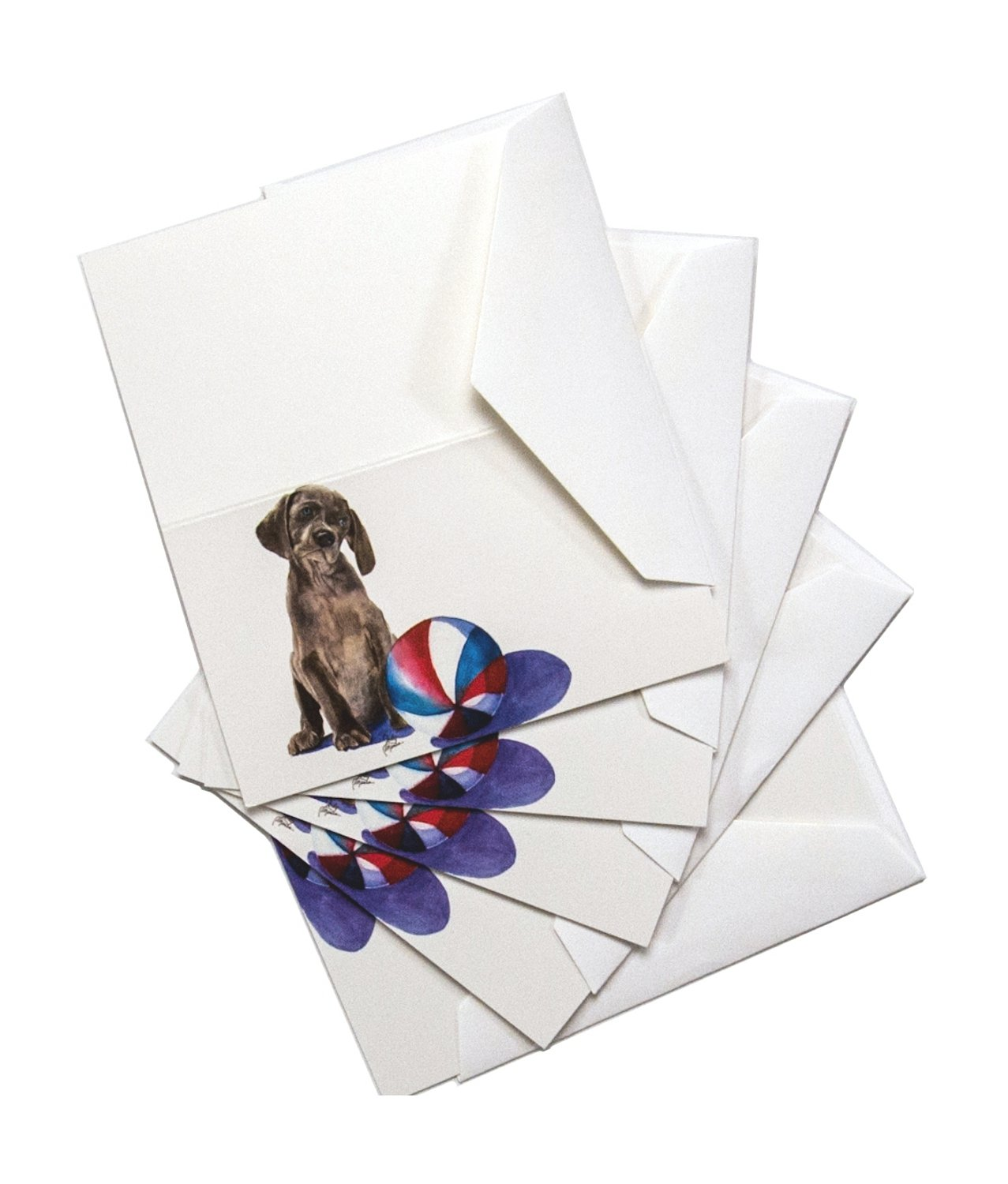 Rainbow Card Company 5-Pack Enclosure Card - Sammy