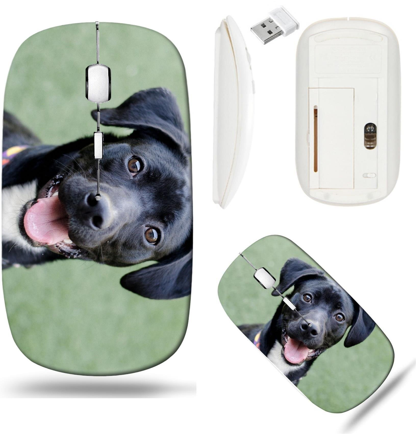 Liili Wireless Mouse White Base Travel 2.4G Wireless Mice with USB Receiver, Click with 1000 DPI for notebook, pc, laptop, computer, mac book ID: 28741721 black dog looking at camera on green backgrou