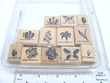 Image Unavailable Not Available For Color Watercolor Minis Stampin Up Rubber Stamp Set
