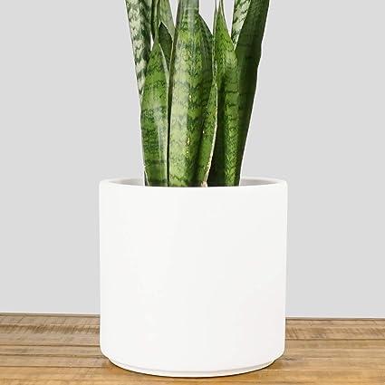 Amazon.com : Indoor Flower Pot | Large Modern Planter, Terracotta ...