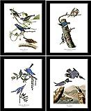 Bird Prints Art (Blue Theme) by James Audubon. Matched Set of 4 Vintage Wall Decor Reproductions. Artwork in 5x7 8x10 11x14 Sizes.