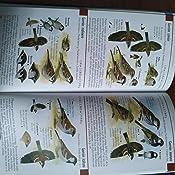 Guía De Bolsillo Para El Observador De Aves De España Y Europa Guías del naturalista. Aves: Amazon.es: Hayman, Peter, Hume, Rob, Copete Peralta, José Luis: Libros