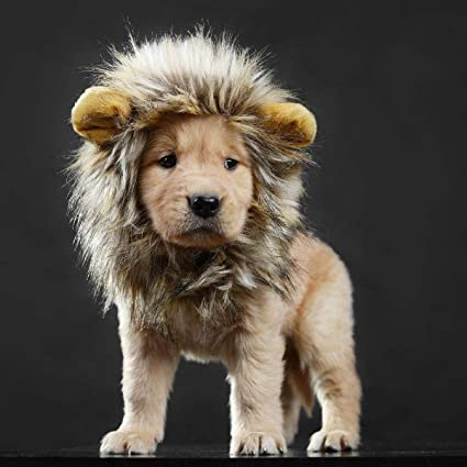 1d529cc9b Amazon.com : lcfun Lion Mane Costume for Cat Puppy - Pet Wig with Ears, Cat  Clothes for Halloween Party : Pet Supplies