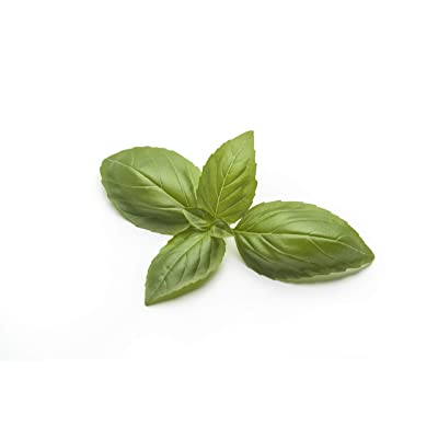 Basil Seeds for Planting Indoors or Outdoor Culinary Herb Garden - 1000 Italian Large Leaf Basil Seeds. : Garden & Outdoor