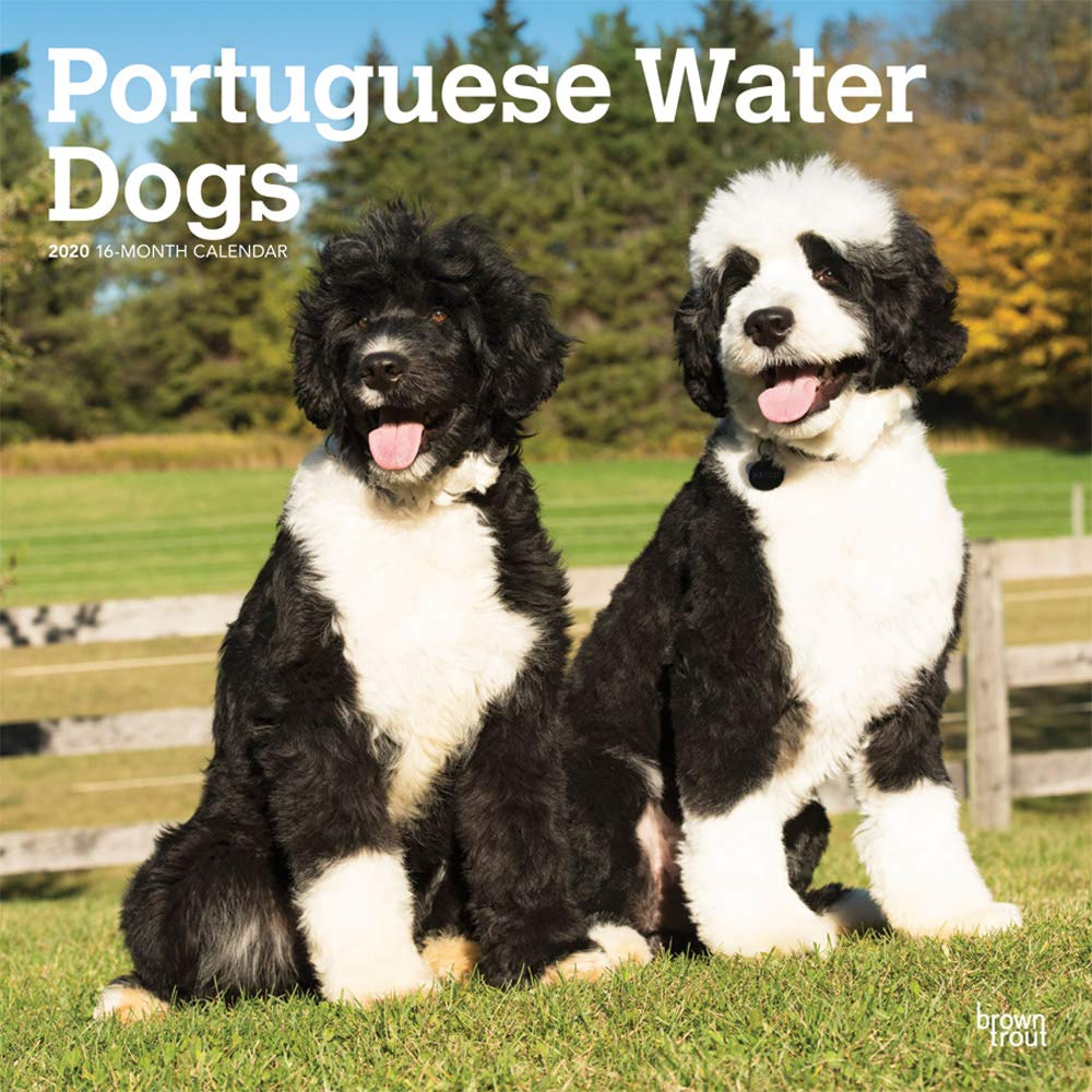 Portuguese Water Dogs 2020 12 X 12 Inch Monthly Square Wall Calendar Animals Dog Breeds Browntrout Publishers Inc Browntrout Publishers Editing Team Browntrout Publishers Design Team Browntrout Publishers Design Team 9781975412593 Amazon Com Books