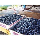 QHYDZ Garden-50/100pcs Semillas Arándanos Azul, Semillas Deliciosa ...
