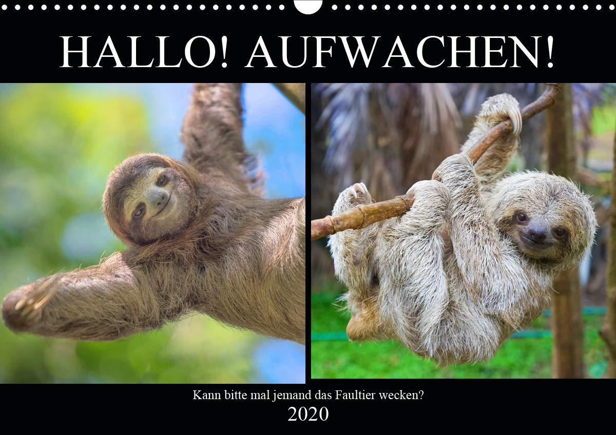 Hallo  Aufwachen  Kann Bitte Mal Jemand Das Faultier Wecken   Wandkalender 2020 DIN A3 Quer