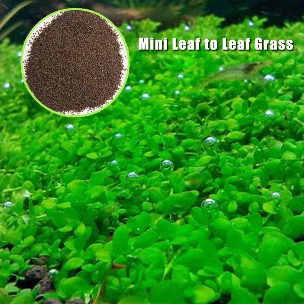 honggen782 1 pack Bag Plant Seeds Fish Tank Aquarium Aquatic Water Grass Decor Garden Foreground Plant