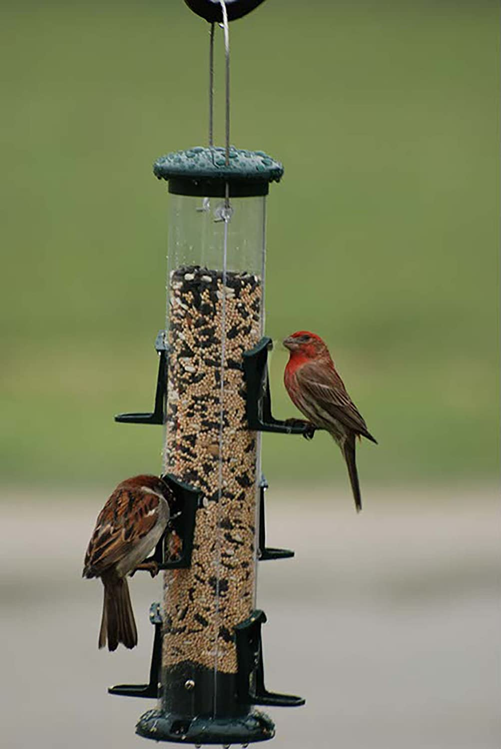 finch feeder squirrelbuster feeders brome