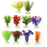 Plantas ornamentales para pecera o acuario de Viskey, moradas