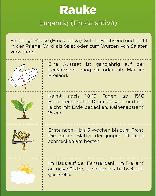 Blattsalat Rucola Saatgut Raukesamen Eruca sativa Rauke Samen Garten-Senfkraut