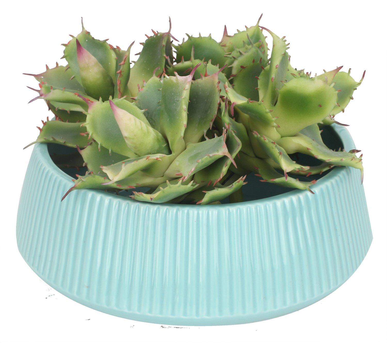 Amazon.com: Duovlo Pack of 2 Artificial Succulent Plant 5.15 Inch ...