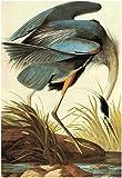 Audubon Great Blue Heron Bird Art Poster Print 13 x 19in