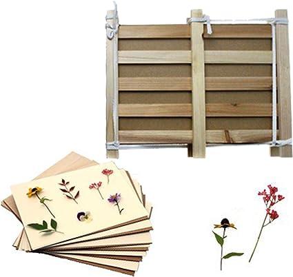 Amazon Com Doergear Pine Wood Herbarium Plant Flower Press