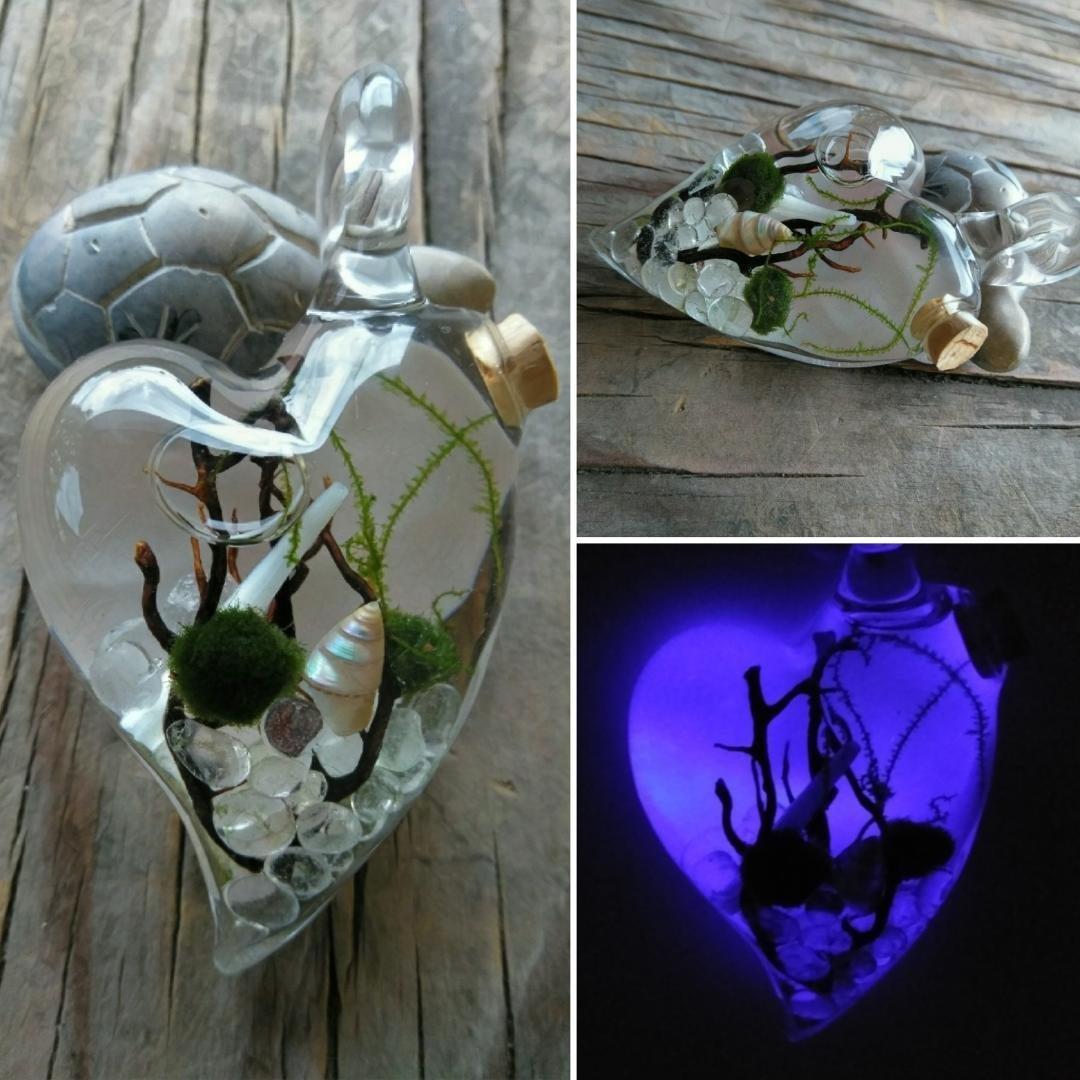 Marimo Moss Terrarium Pendant Glowarium Heart - Custom - Live Plant Pendant - FREE ECONOMY SHIPPING