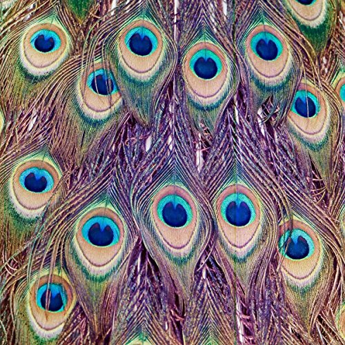 Salty & Sweet Peacock Feathers Artwork,