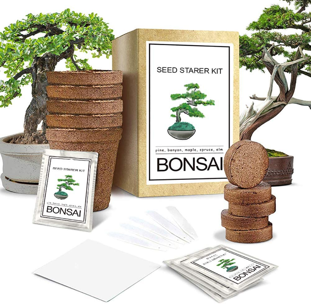 CRZJ Kit de Cultivo de jardín de Hierbas para Interiores, Kit de Inicio de árbol Bonsai, Kit de Semillas para Principiantes para Interiores y Exteriores, Mezcla de Suelo, macetas biodegradables