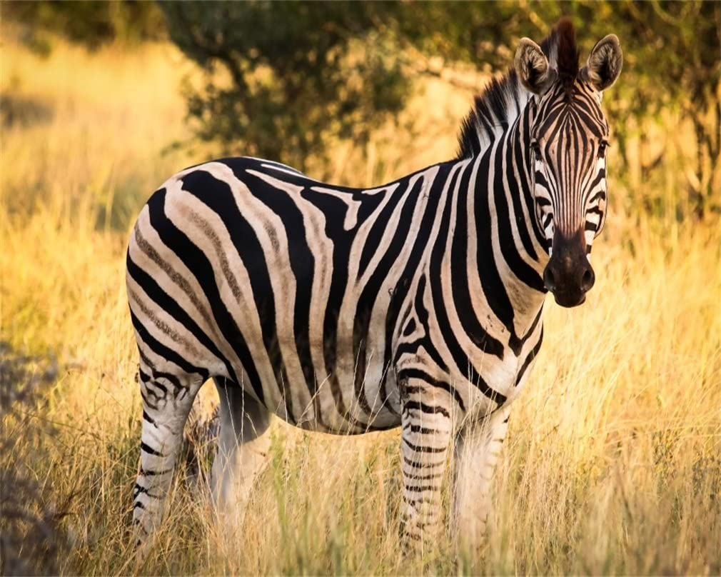 AOFOTO 5x4ft Zebra in Nature Reserve Backdrop African Wildlife Forest Park Photography Background Outdoor Travel Kid Artistic Portrait Photo Studio Props Video Drape Wallpaper