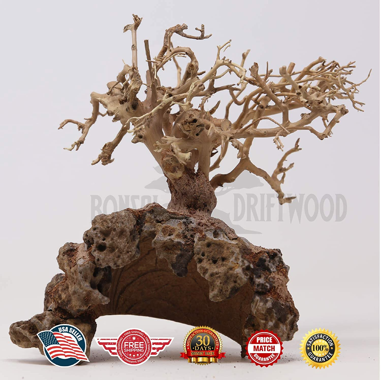 Amazon Com Bonsai Driftwood Aquarium Tree Dry Coconut Gd Random Pick 8in H X 10in L Natural Handcrafted Fish Tank Decoration Helps Balance Water Ph Levels Stabilizes Environments Easy To