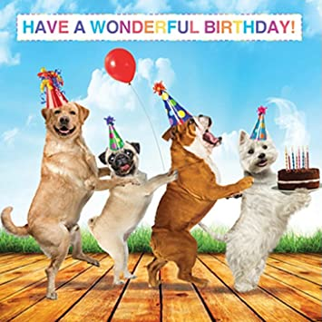 Labrador Pug Bulldog Westie Birthday Card Birthday Conga Amazon
