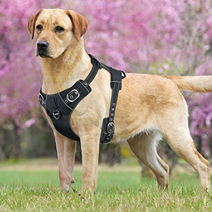 Amazon.com : Idepet No-Pull Dog Harness with Handle Adjustable ...