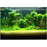Baosity Attractive 3D Digital Aquarium Background Poster Fish Tank Wall Decoration (Plants)