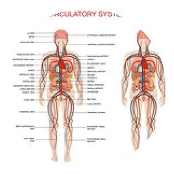 my-puzzle-design alfombrilla de ratón la anatomía del corazón, el ...