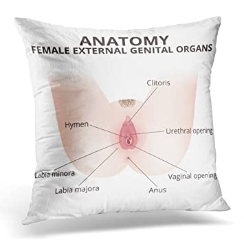 Amazon.com: Golee Throw Pillow Cover Hymen the Structure of Female ...
