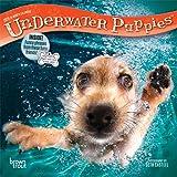 Underwater Puppies 2018 7 x 7 Inch Monthly Mini Wall Calendar, Pet Humor Dog