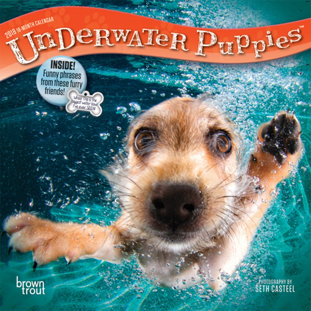 Amazon.com: Underwater Puppies 2018 7 x 7 Inch Monthly Mini Wall Calendar,  Pet Humor Dog (9781465096715): BrownTrout Publishers: Books