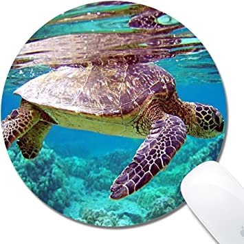 Amazon Com Red Turtle Mouse Pad Mousepads Bfpads Cute Funny Mousepad Pads Mat For Gaming Game Office Mac Red Turtle Office Products