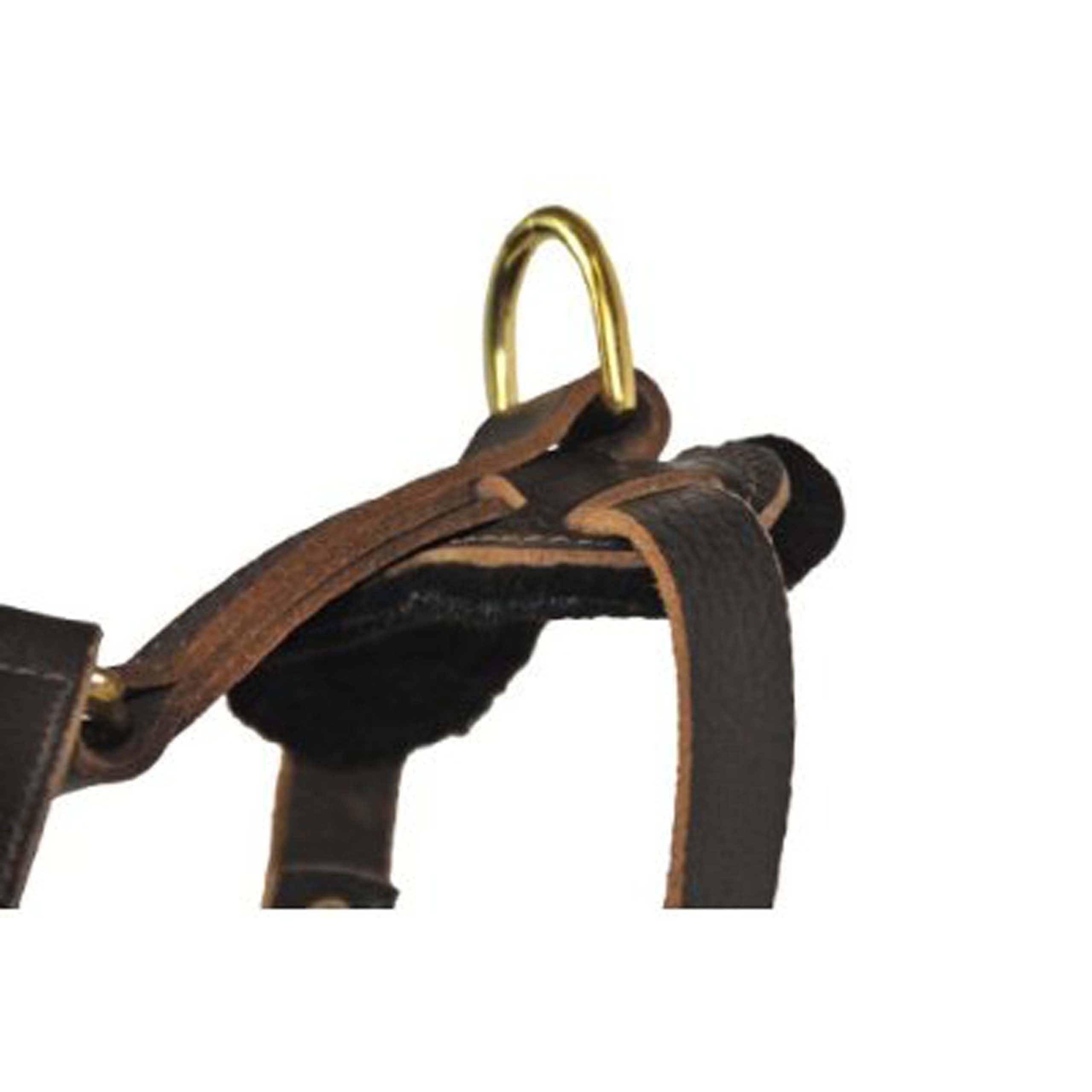 Dean and Tyler The Victory Solid Brass Hardware Dog Harness, Brown, Large - Fits Girth Size: 31-Inch to 41-Inch by Dean & Tyler (Image #5)