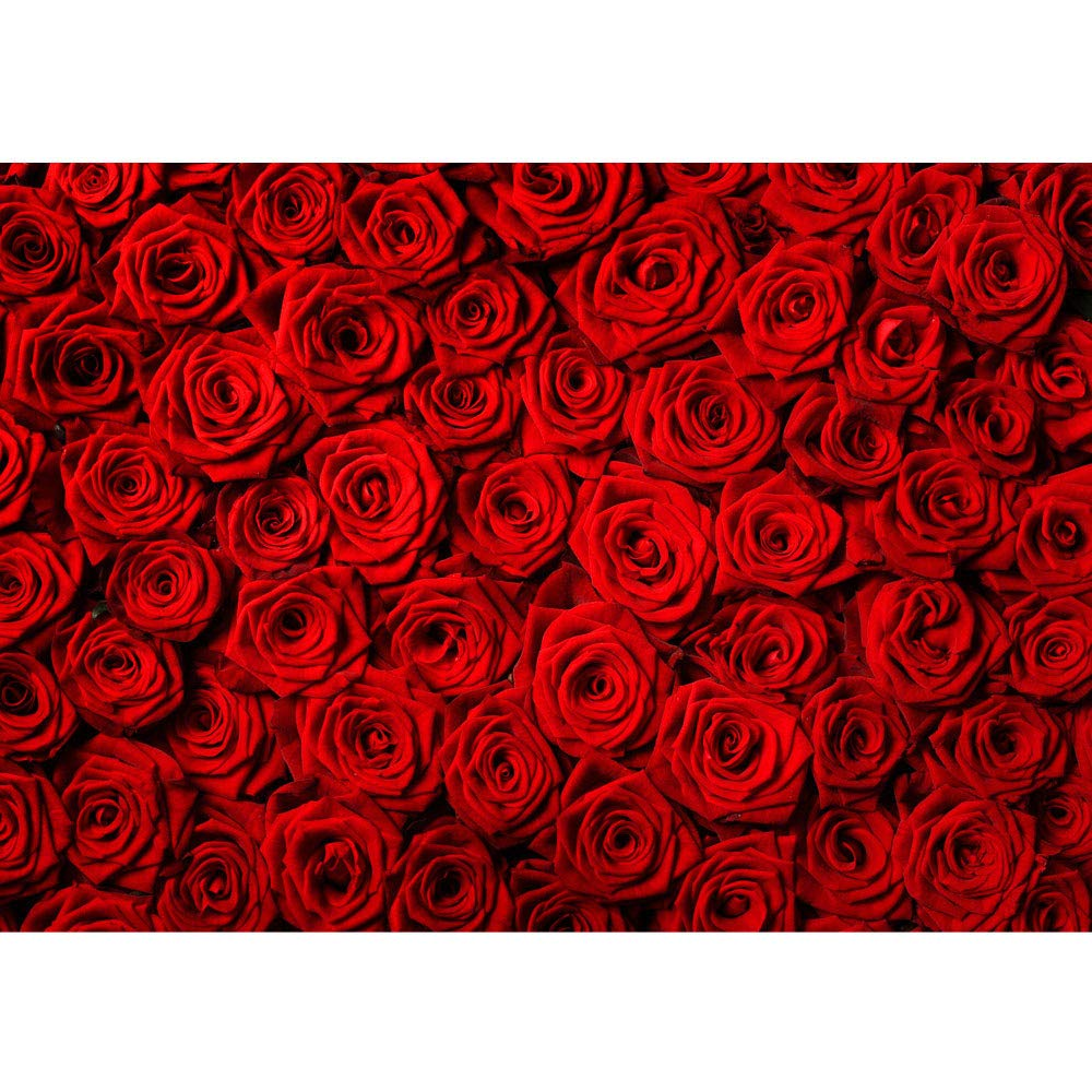Foto Carta da fiori in tessuto non tessuto Premium Plus–Orchidee Fiore Rose Natura Piante Dente Campo di papaveri Tulipani Magnolie ornamenti, A PERFECT ROSE, Fototapete 200x140cm | PREMIUM PLUS liwwing (R) Fototapete