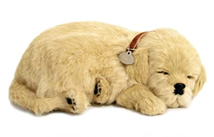 Perfect Petzzz 811 Golden Retriever Amazonde Spielzeug