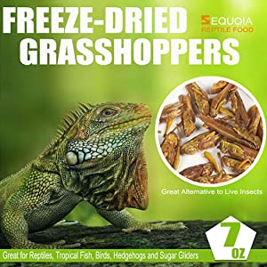 Sequoia Freeze Dried Grasshopper Reptile Food for Turtles, Bearded Dragon, Hedgehog,Lizard, Chameleon, Birds