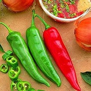 Garden Salsa Hybrid Hot Pepper Garden Seeds - 100 Seeds - Non-GMO Vegetable Gardening Seed