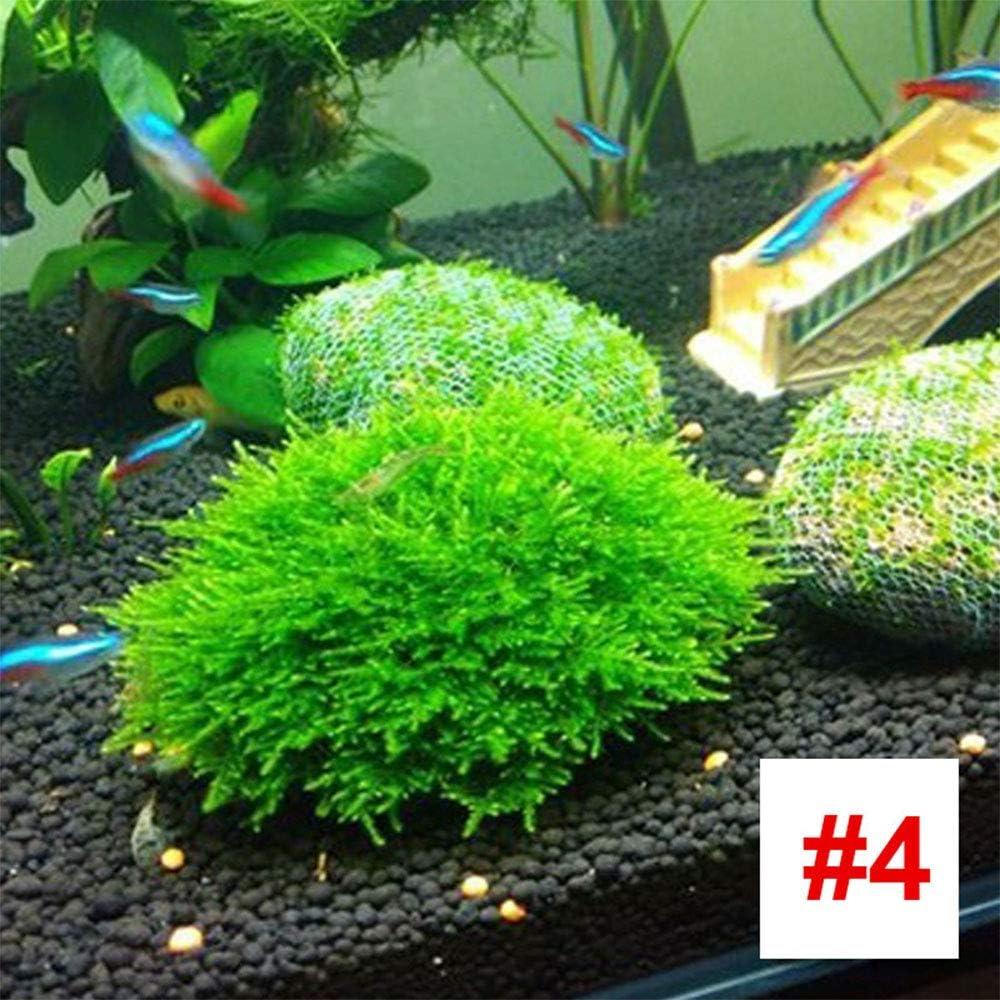 1000 pcs Bolsa de Agua Semillas de c/ésped F/ácil de Cultivar para los huertos de jard/ín Decoraci/ón SKAISK Semillas de Acuario acuarios