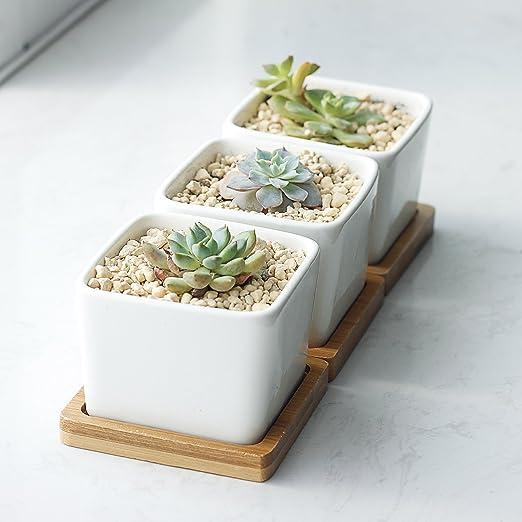 белые керамические горшки для цветов