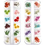 Teenior 24 Colors Nail Dried Flowers, 3D Nail Art Sticker for Tips Manicure Decor Mixed Accessories, Starry Leaves Flower (2