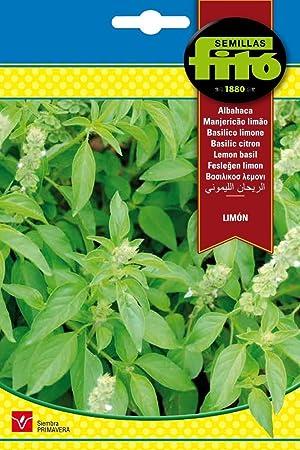 Semillas Fitó 8849 - Semillas de Albahaca Limón