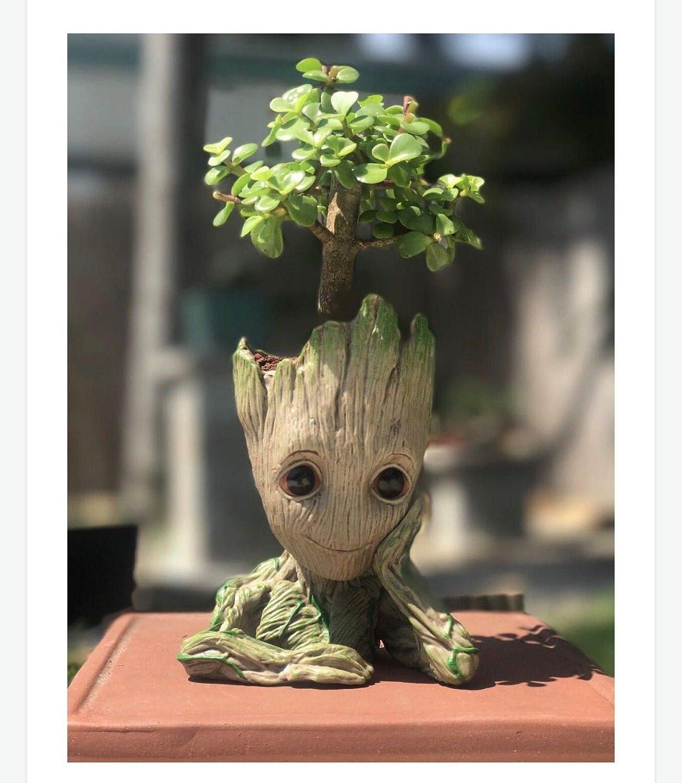 Amazon Com Jade Bonsai Tree Baby Groot Bonsai Gift Garden