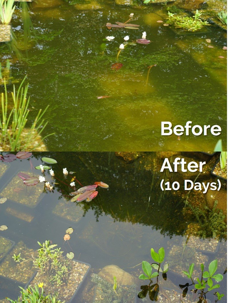 Envii Natural Pond Klear – Improves Water Clarity & Reduces Sludge in Natural & Wildlife Ponds - Treats 20,000 Litres Bio8